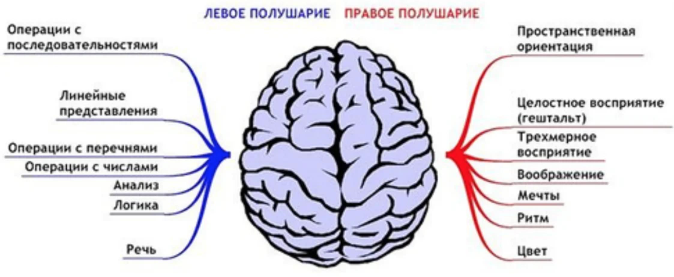 Гимнастика мозга