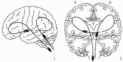 neyrologo1