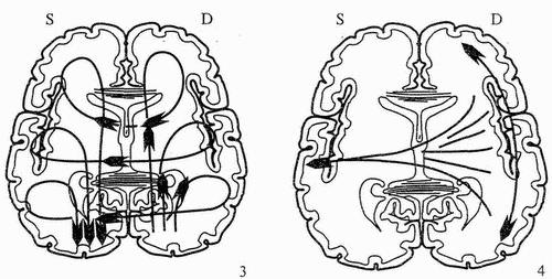neyrologo2